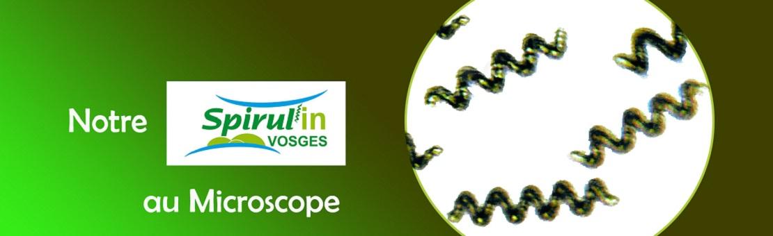 Notre spiruline naturelle française au microscope